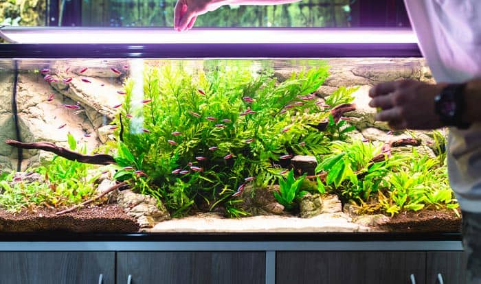 best nitrate remover for freshwater