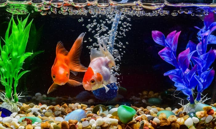 best-rocks-for-aquariums