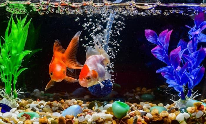 best-rocks-for-aquariums