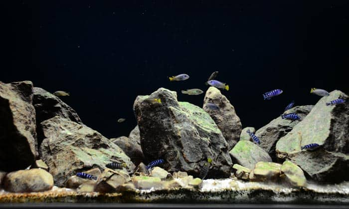best rocks for freshwater aquarium
