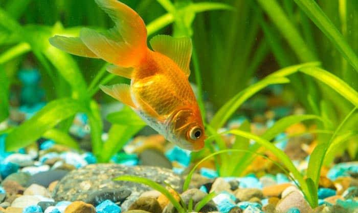 good-bacteria-for-fish-tank