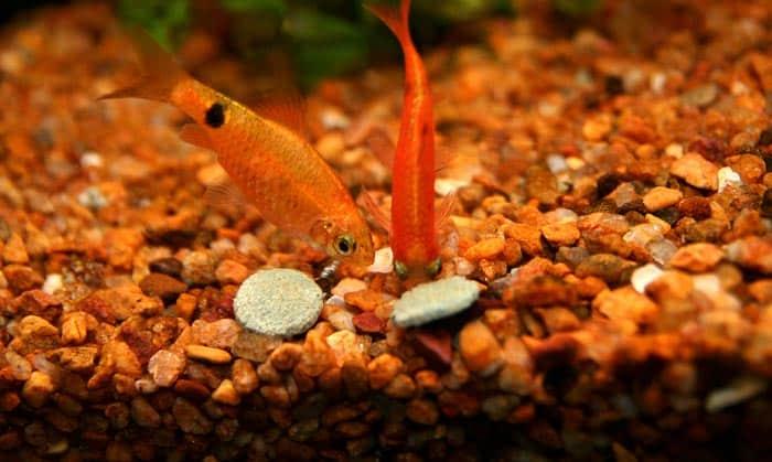 nitrifying-bacteria-for-saltwater-aquarium