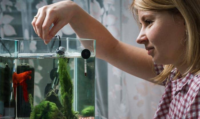 nitrite-levels-in-saltwater-aquarium