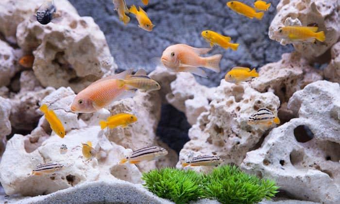 safe-rocks-for-freshwater-aquarium