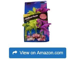 Blue-Ribbon-Vibran-Sea-Flowering-Cluster