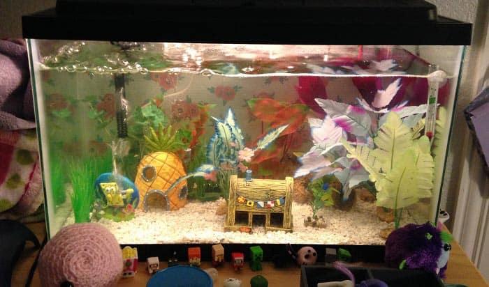 best-10-gallon-aquarium-filter