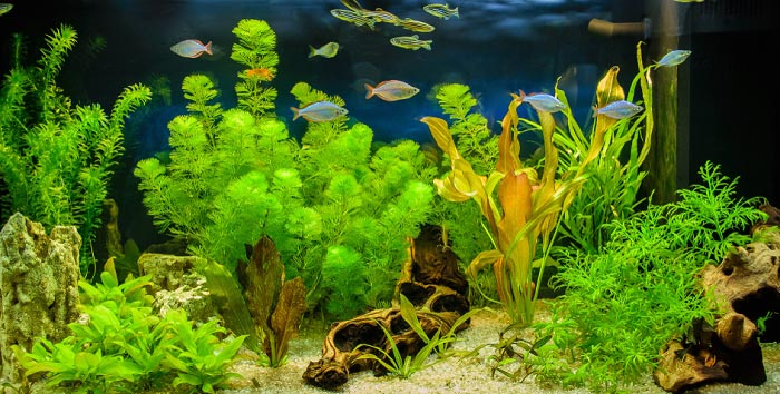 best-artificial-aquarium-plants