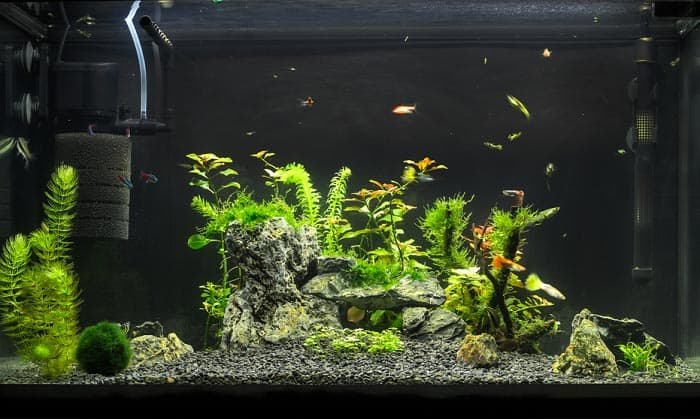 best filter for 20 gallon aquarium