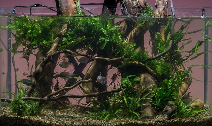 list-of-aquarium-safe-wood