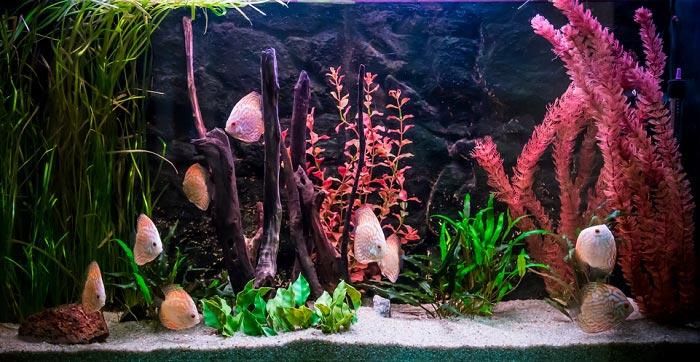 most-realistic-artificial-aquarium-plants