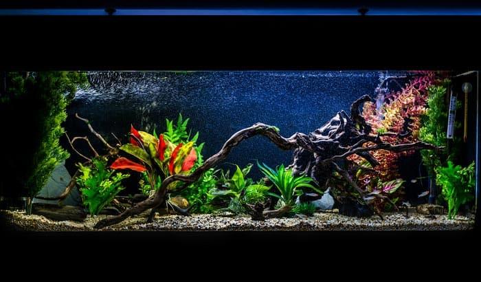 safe-wood-for-freshwater-aquarium