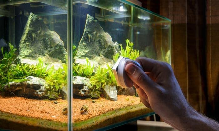 best-aquarium-algae-scraper