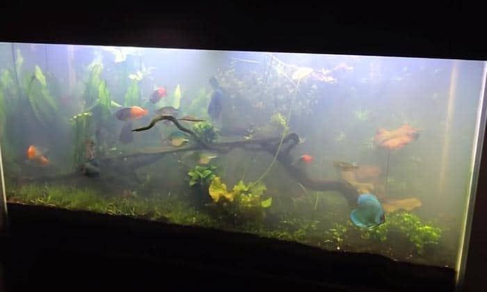 fish-tank-water-clarifier