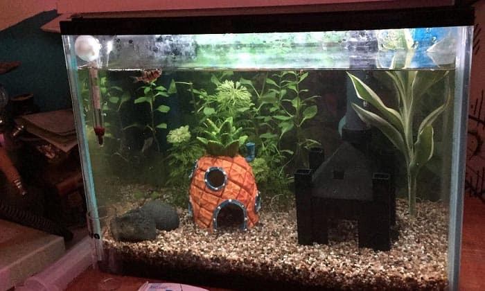 led-aquarium-light-with-timer