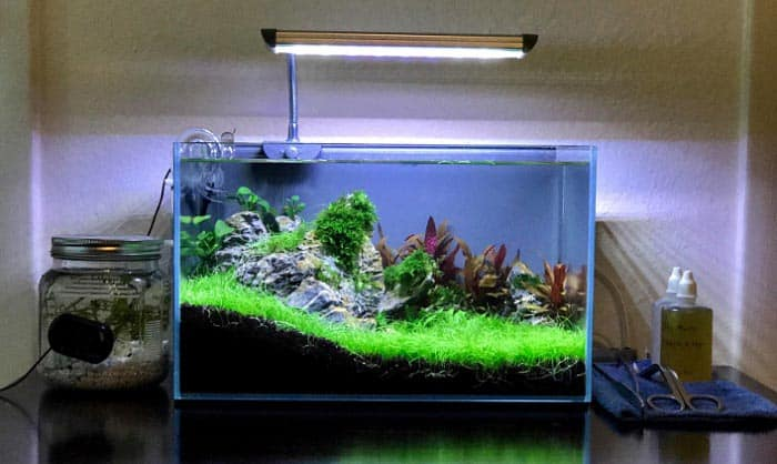 10-gallon-rimless-aquarium