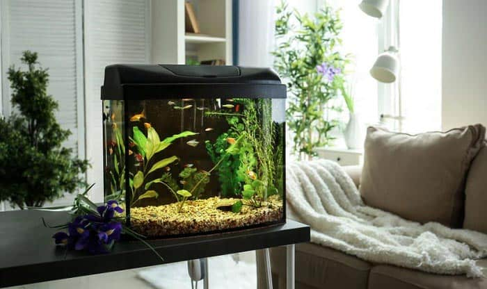 20-gallon-long-aquarium
