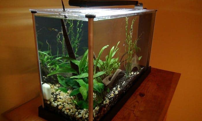 5-gallon-aquarium-kit