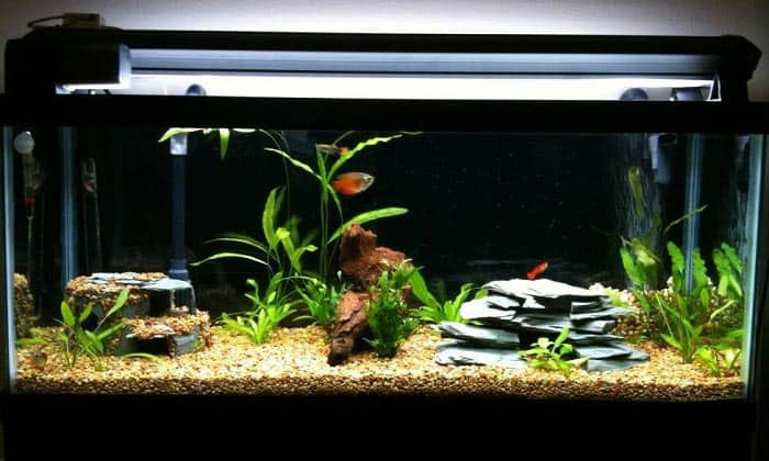 best-30-gallon-aquarium
