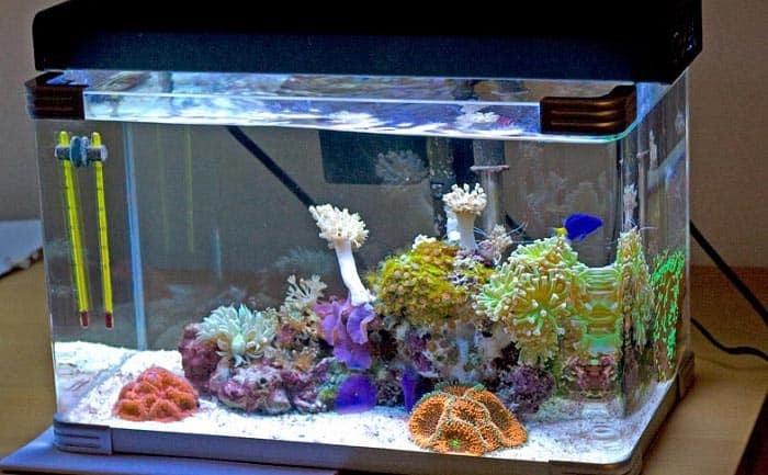 best 30 gallon fish tank