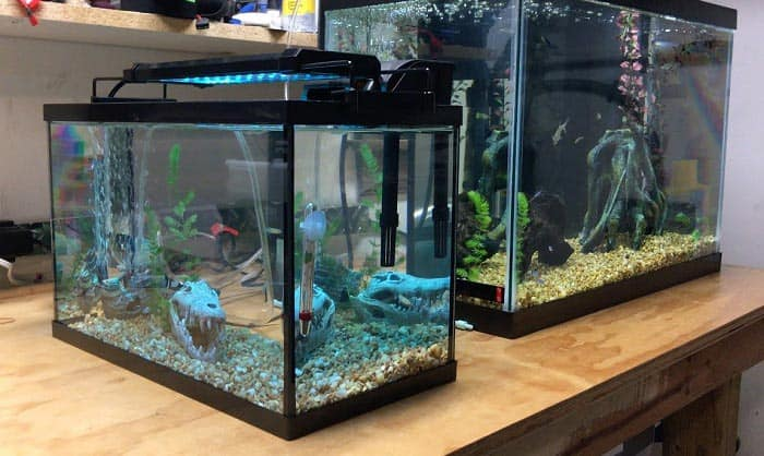 best 5 gallon aquarium