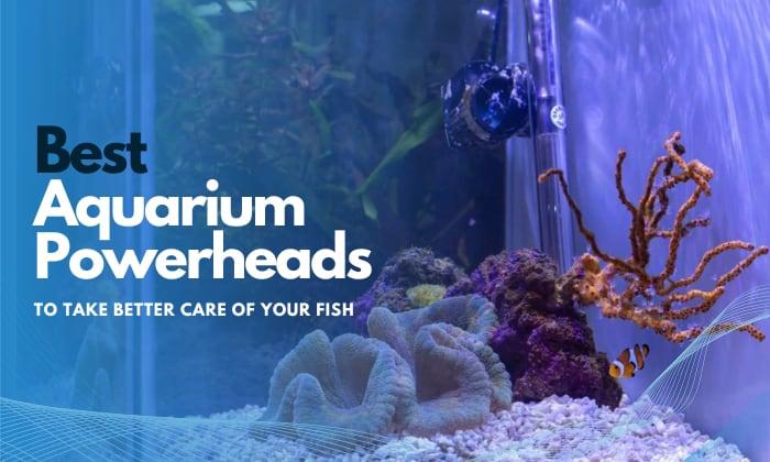 best aquarium powerhead