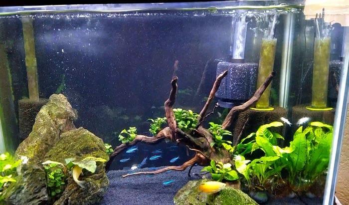 best-aquarium-sponge-filter