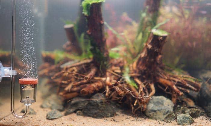 best-co2-diffuser-for-large-aquarium