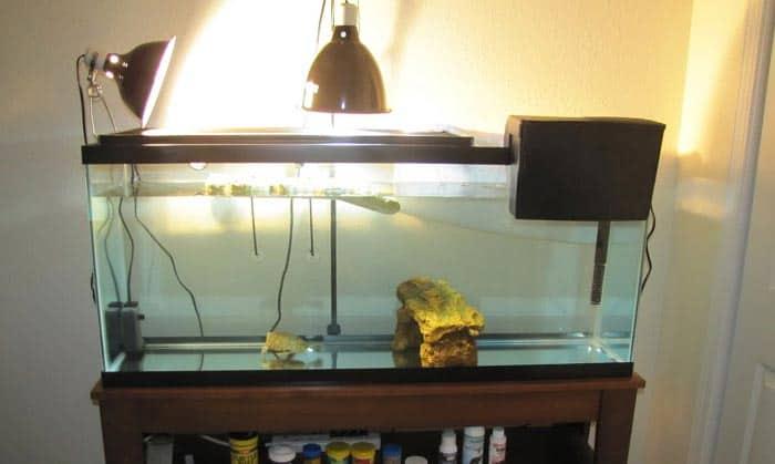 best filter for 55 gallon aquarium