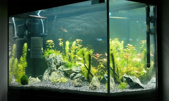 power-filters-for-aquariums