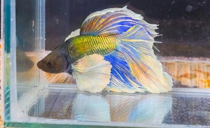 best betta aquarium