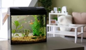 The Best All in One Aquarium Product Reviews