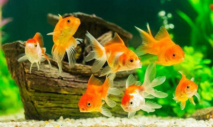 aquarium filter for goldfish