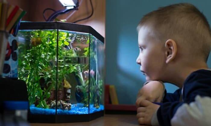 best-aio-aquarium