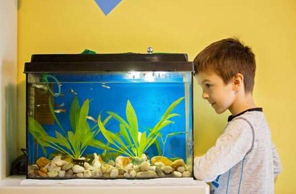 best fish tank for kids