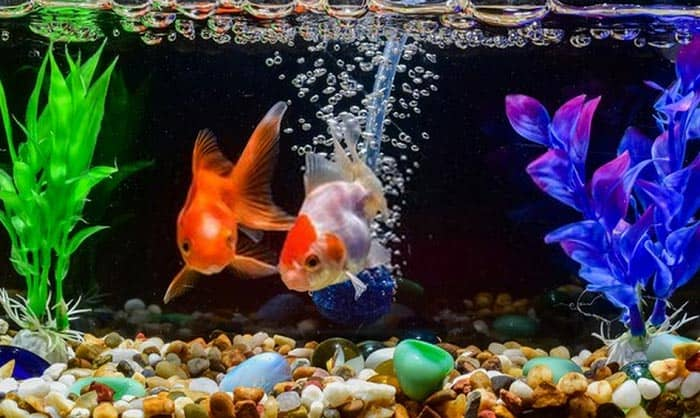 best goldfish tank filter