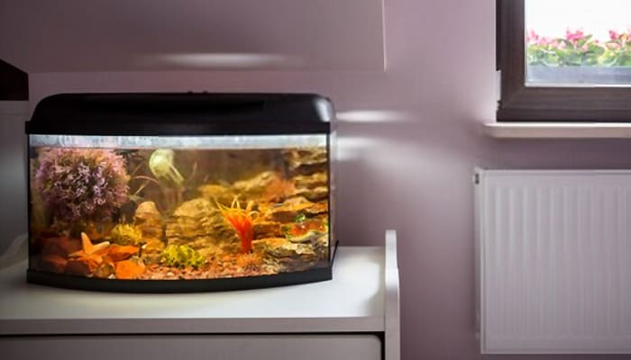 The Best Fish Tanks for Beginners Product Reviews