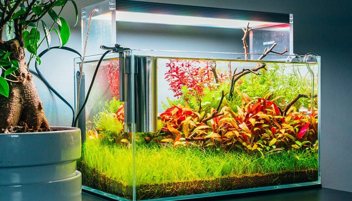 The Best Nano Aquarium Product Reviews