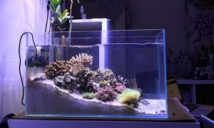 The Best Nano Reef Tank Product Reviews