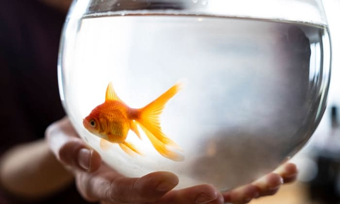 best-goldfish-bowls