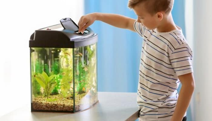 best-starter-aquarium-reviews