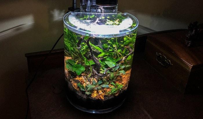 best-starter-aquarium