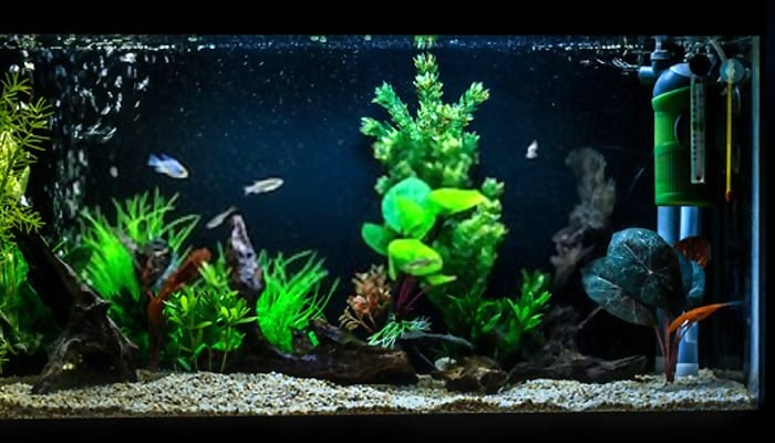 internal-filters-for-fish-tanks