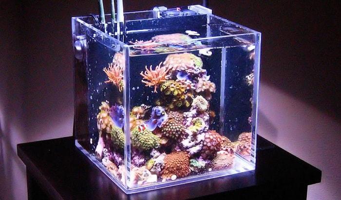 mini-reef-tank