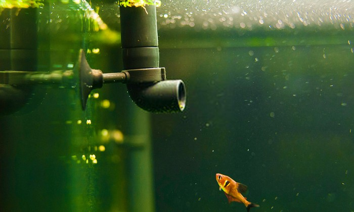 small-water-filter-for-fish-tank