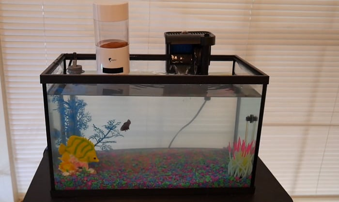 auto-feeders-for-fish