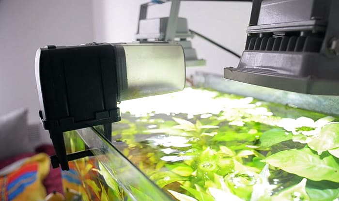 auto-fish-feeder-review