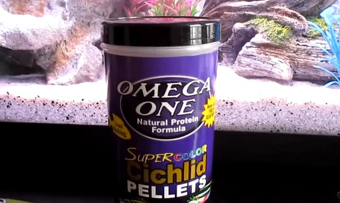 best-food-for-african-cichlids