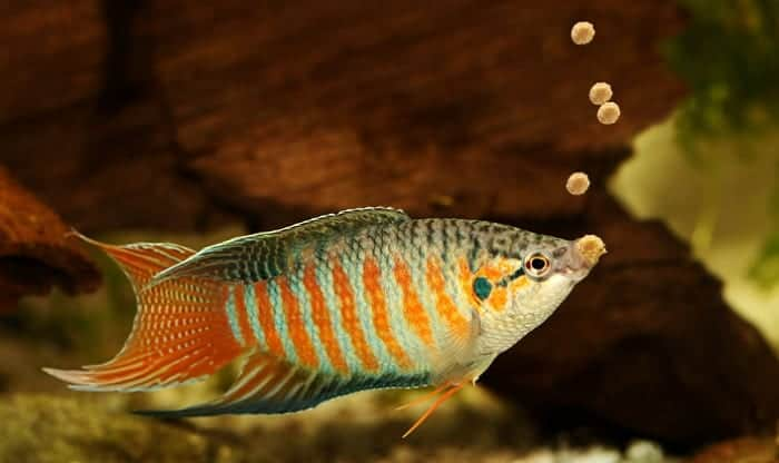 best-freshwater-fish-food