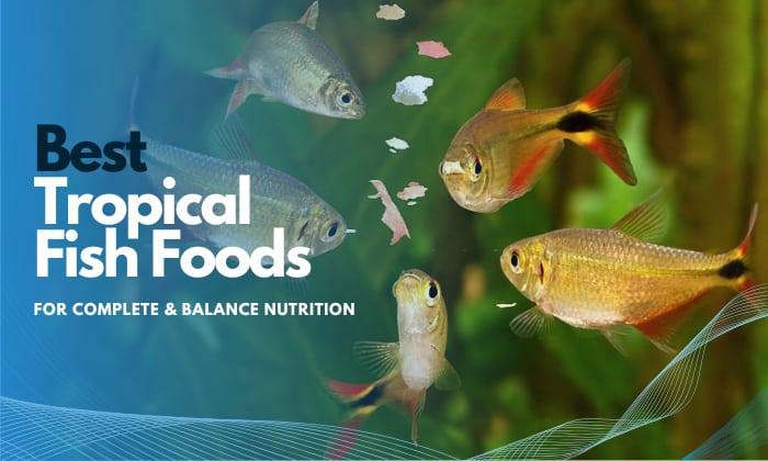best tropical fish food