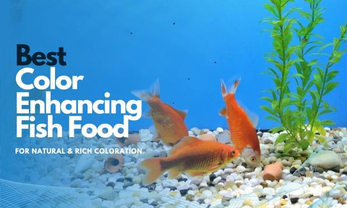 best color enhancing fish food